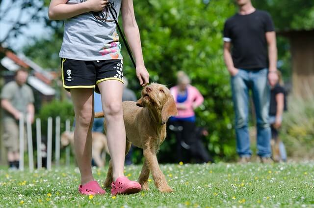 "Achieving Dog Training Success With The 18 ""Don't s"" Rules"