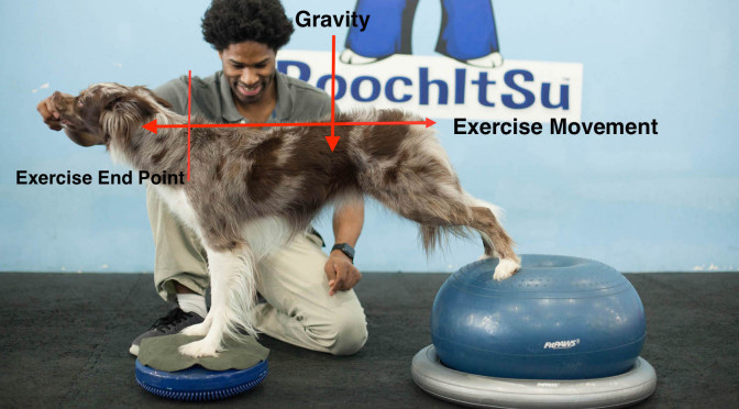 Advanced Dog Training Points For Conditioning Your Dog