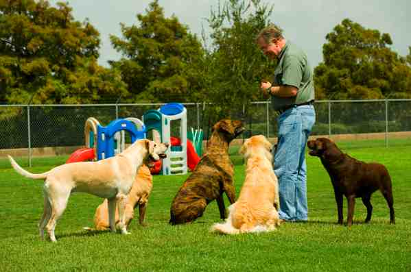 Choosing A Dog Training Course