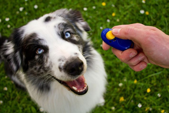 Clicker Training Your Dog