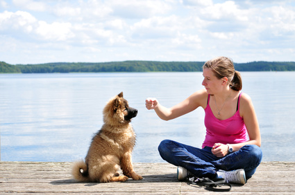 Consider All Dog Training Options