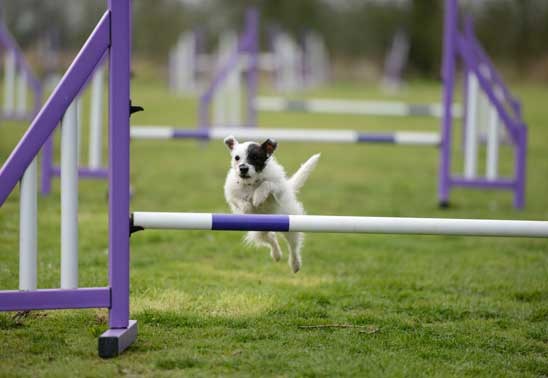 Dog Agility Training for Your Puppy