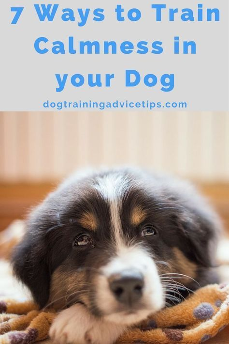 Dog Obedience Training Ideas