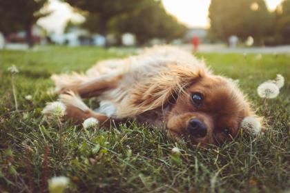 Great Tips For Caring For A Canine Companion