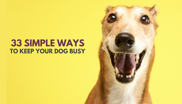 Learn Ways To Keep Your Dog Happy And Content
