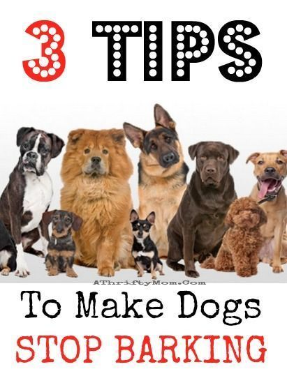 Loving Your Dogs: Tips And Tricks
