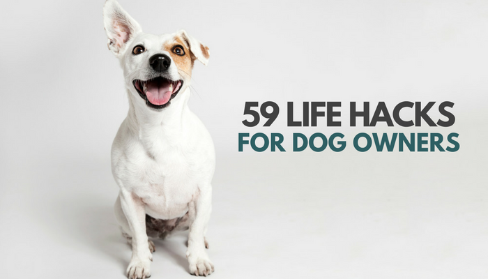 Be The Best Dog Owner With These Tips And Tricks