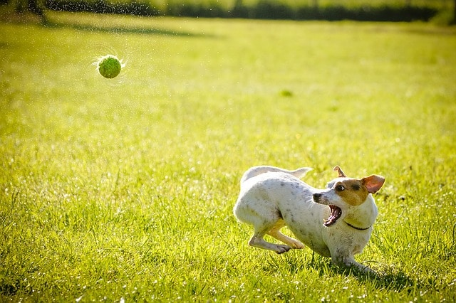 Pet Care Tips Specifically For Dog Owners